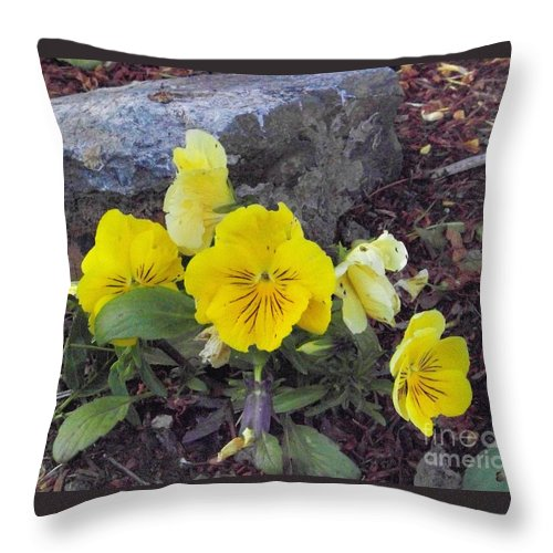 Flowers Throw Pillow featuring the photograph Yellow Pansies by Charles Robinson