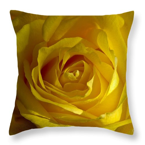 Yellow Throw Pillow featuring the photograph Yellow Rose by Anthony Sacco
