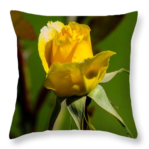 Stem Throw Pillow featuring the photograph Yellow Rose by Tikvah's Hope