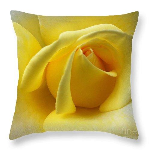 Flowers Throw Pillow featuring the photograph Yellow Rose Softness by Susan Garren