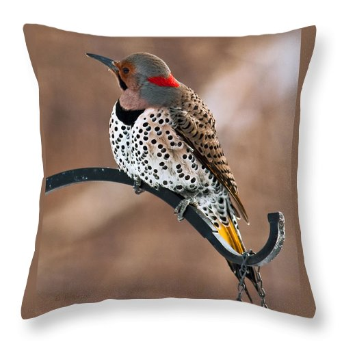 Yellow Shafted Northern Flicker Throw Pillow featuring the photograph Yellow-shafted Northern Flicker by Edward Peterson
