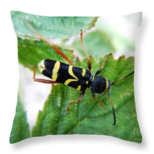 Wildlife Throw Pillow featuring the photograph Yellow Stripped Beetle by Loreta Mickiene