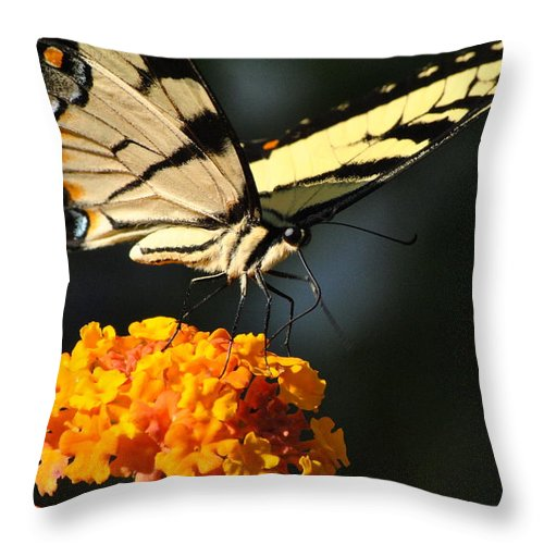 Swallowtail Throw Pillow featuring the photograph Yellow Swallowtail by Kelly Nowak