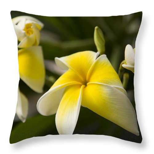 Daniel Stowe Garden Throw Pillow featuring the photograph Yellow Swirl by Marilyn Cornwell