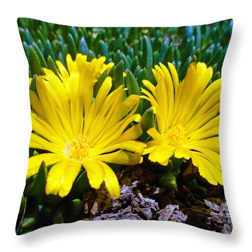 Yellow Throw Pillow featuring the photograph Yellow Twins by Robert Meyers-Lussier
