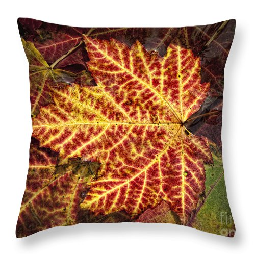 Fall Throw Pillow featuring the photograph Yellow Veins by Claudia Kuhn