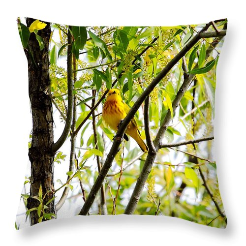 Yellow Warbler Throw Pillow featuring the photograph Yellow Warbler by PJQandFriends Photography