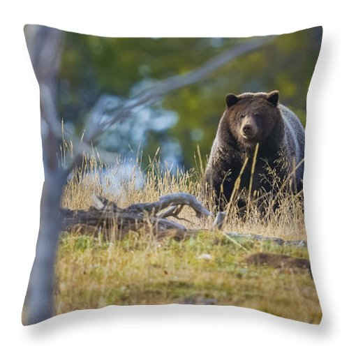 Grizzly Throw Pillow featuring the photograph Yellowstone Grizzly Coming Over Hill by Greig Huggins