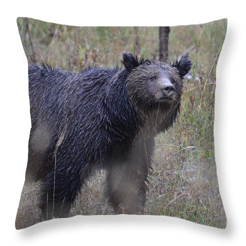 Grizzly Throw Pillow featuring the photograph Yellowstone Grizzly by Deanna Cagle