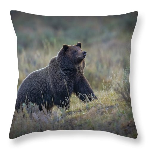 Grizzly Throw Pillow featuring the photograph Yellowstone Grizzly On The Lookout by Greig Huggins