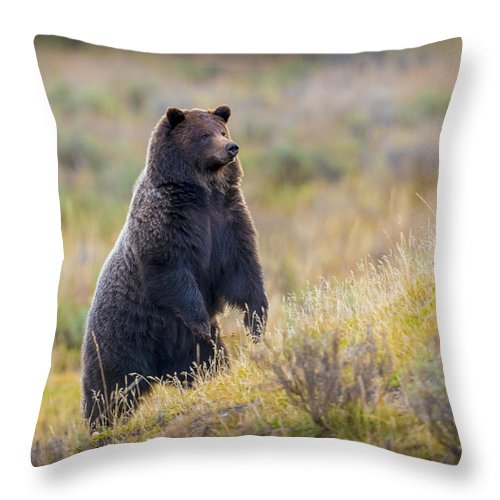 Grizzly Throw Pillow featuring the photograph Yellowstone Grizzly Standing - 1 by Greig Huggins