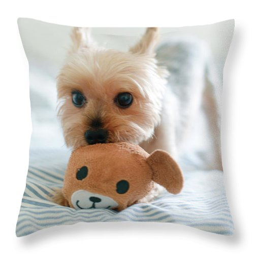 Pets Throw Pillow featuring the photograph Yorkie Playing With Teddy Toy by Cheryl Chan