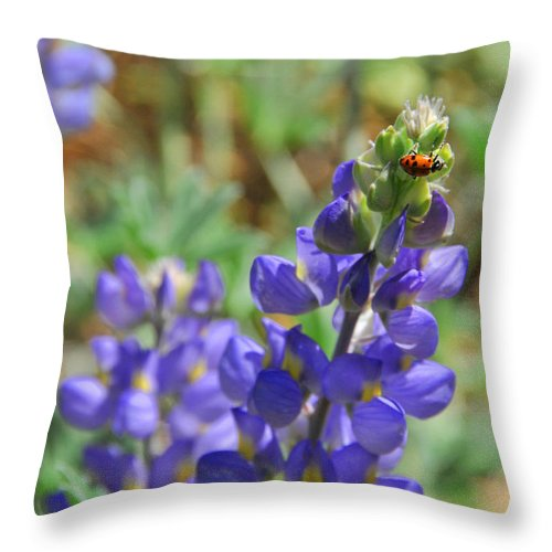 Lupines Throw Pillow featuring the photograph Yosemite Lupine And Ladybug by Lynn Bauer