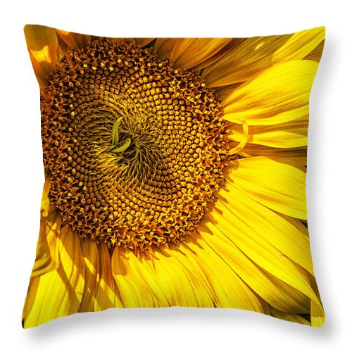 Sunflower Throw Pillow featuring the photograph You Are My Sunshine by Belinda Greb