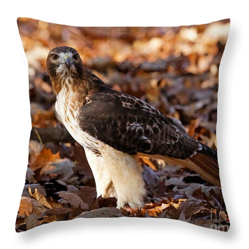 Hawk Throw Pillow featuring the photograph You Got Something To Say by Lloyd Alexander