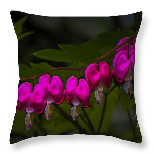 Bleeding Hearts Throw Pillow featuring the photograph You Keep Me Hanging On by Ola Allen