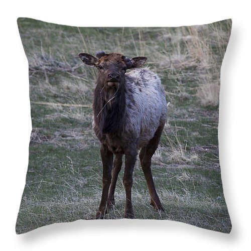 Landscapes Throw Pillow featuring the photograph You Lookin' At Me by Amber Kresge
