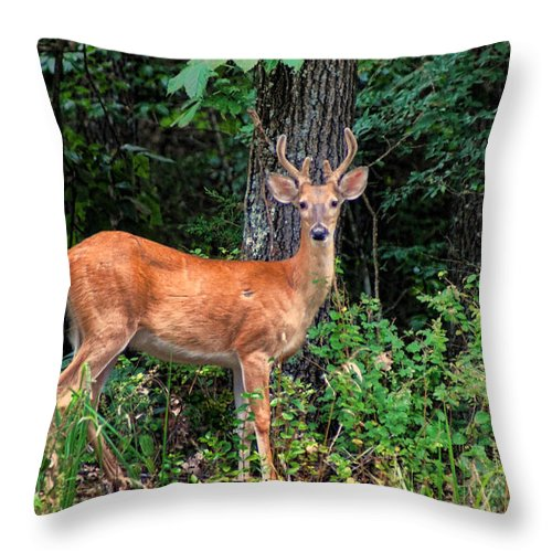Deer Throw Pillow featuring the photograph You Looking At Me by Rick Friedle
