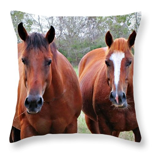 Bay Quarter Horse Throw Pillow featuring the photograph You Take Her No You Take Her by Sherri McCollum