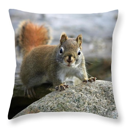 Animal Throw Pillow featuring the photograph You Wanna Chat by Deborah Benoit