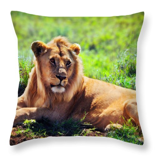 Lion Throw Pillow featuring the photograph Young Adult Male Lion On Savanna. Safari In Serengeti. Tanzania by Michal Bednarek