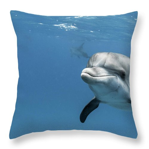 Underwater Throw Pillow featuring the photograph Young Atlantic Spotted Dolpin by Kerstin Meyer