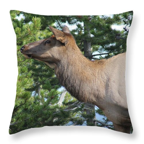 Wildlife Throw Pillow featuring the photograph Young Elk by G Berry