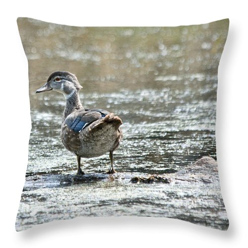 Wood Ducks Throw Pillow featuring the photograph Young Male Wood Duck by Cheryl Baxter