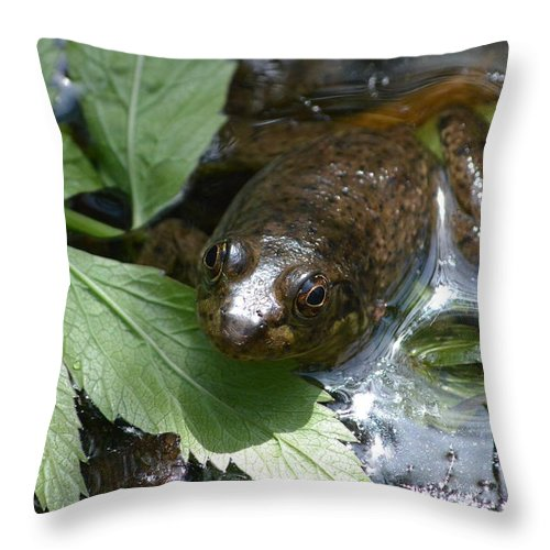 Young Throw Pillow featuring the photograph Young Mill Lake Frog II by Nicki Bennett
