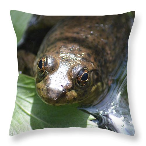 Young Throw Pillow featuring the photograph Young Mill Lake Frog by Nicki Bennett