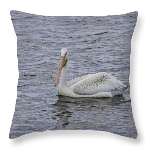 White Pelican Throw Pillow featuring the photograph Young Pelican by Thomas Young