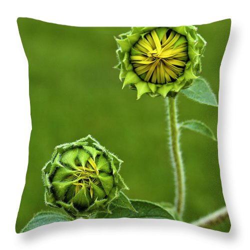 Sunflowers Throw Pillow featuring the photograph Young Sunflowers by Scott Moss