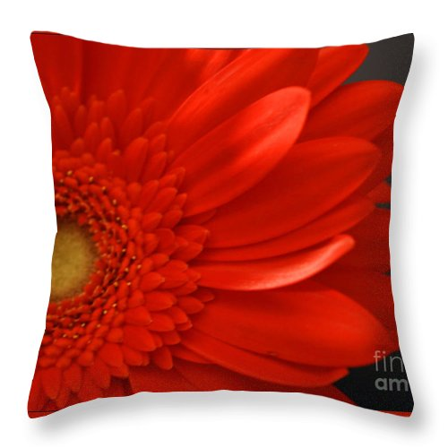 #gerbera #flower #macro #floral #print #photography #fineart #artist #beauty #botanical #beautiful Throw Pillow featuring the photograph Beautiful by Jacquelinemari
