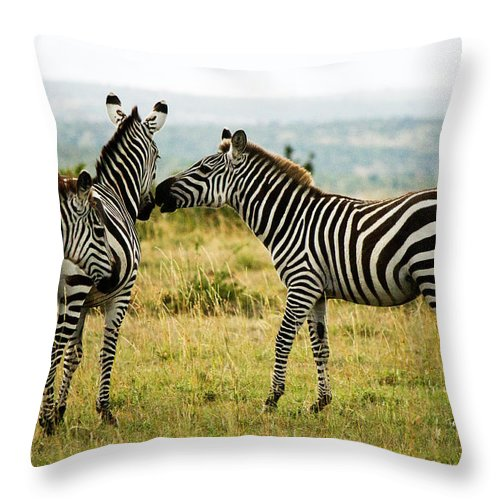 Zebra Throw Pillow featuring the photograph Zebra by Amy Warr