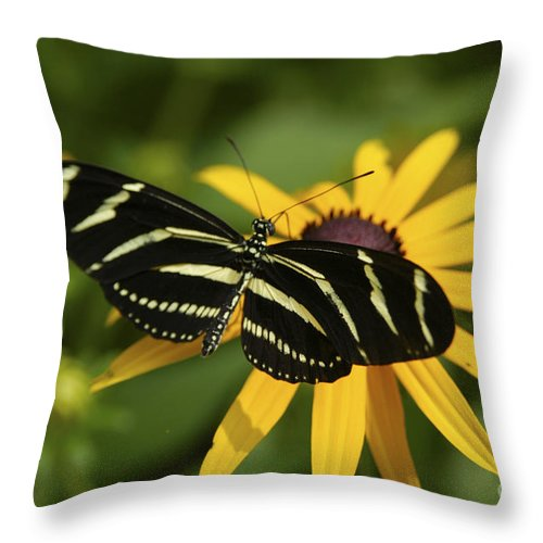 Butterfly Throw Pillow featuring the photograph Zebra Butterfly by Anthony Sacco