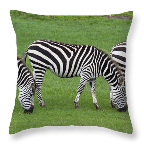 Animal Throw Pillow featuring the photograph Zebra by Chris Smith