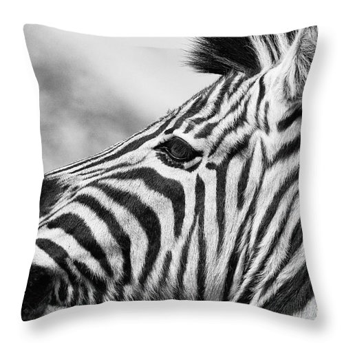 Lisa Cockrell Throw Pillow featuring the photograph Zebra Head Profile by Lisa Cockrell