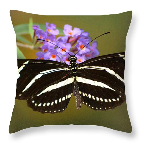 Butterfly Throw Pillow featuring the photograph Zebra Longwing by Cindy Manero