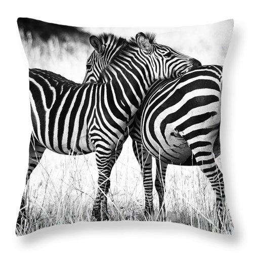 3scape Throw Pillow featuring the photograph Zebra Love by Adam Romanowicz