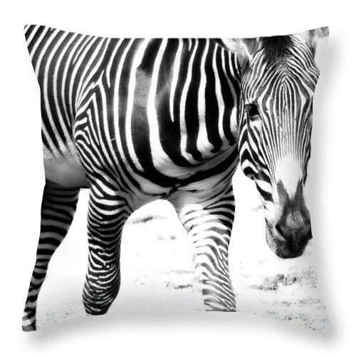 Stripe Throw Pillow featuring the photograph Zebra by Michelle Calkins