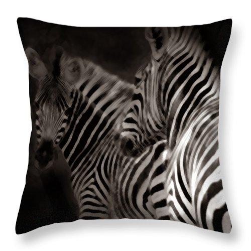 Zebra Throw Pillow featuring the photograph Zebra Night by Joseph G Holland
