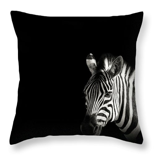 Black Color Throw Pillow featuring the photograph Zebra Portrait In Black Background by George Pachantouris