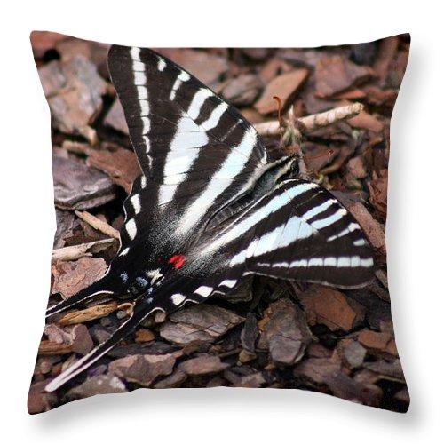 Zebra Swallowtail Throw Pillow featuring the photograph Zebra Swallowtail Butterfly by Karen Adams