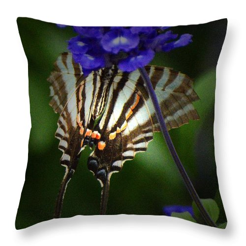 Butterfly Throw Pillow featuring the photograph Zebra Swallowtail by Cindy Manero