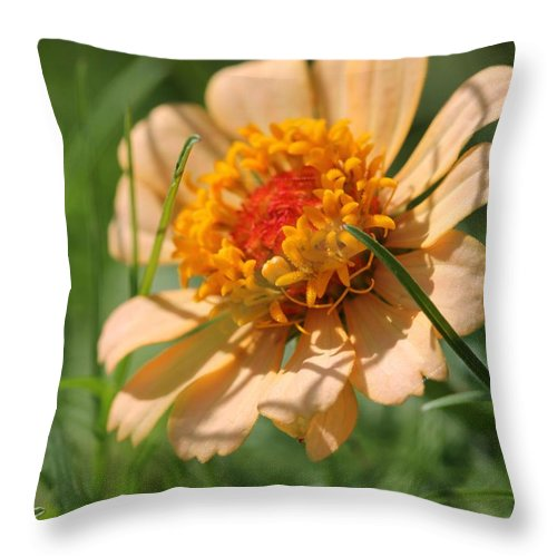 Mccombie Throw Pillow featuring the photograph Zinnia From The Candy Mix by J McCombie