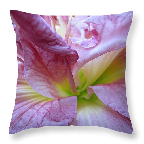 Daylily Throw Pillow featuring the photograph Zona Rosa Daylily by MTBobbins Photography