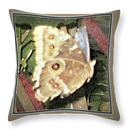 Wildlife Art Prints Throw Pillow featuring the photograph Don't Fly Away by Danielle Parent