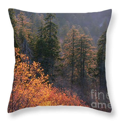 Throw Pillow featuring the photograph Great Smoky Mountains Morning by Sandra Bronstein
