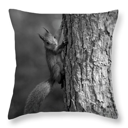 Lehtokukka Throw Pillow featuring the photograph Red Squirrel In Bw by Jouko Lehto