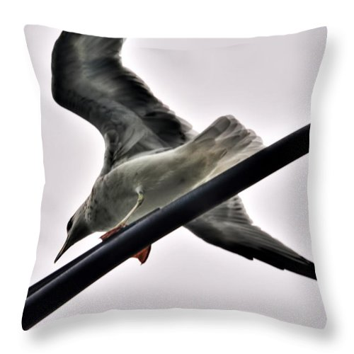 Throw Pillow featuring the photograph 002 Gull To Out Do Wallenda by Michael Frank Jr